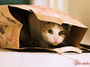 Don't let the cat out of the bag