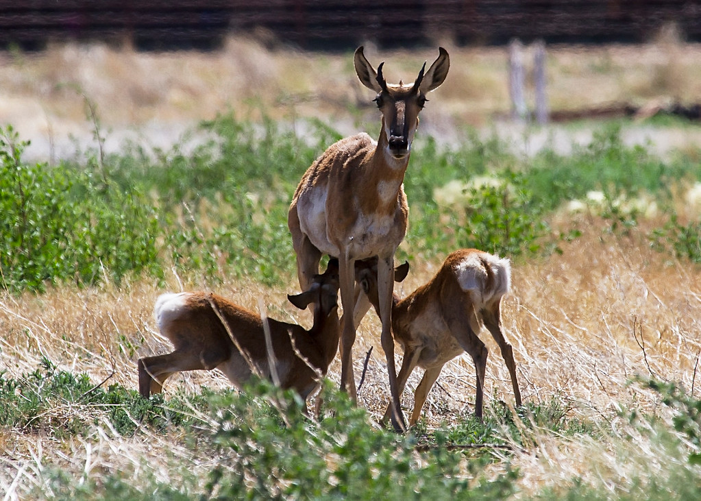 (June 22, 2014) Sunday brunch in Prescott at the American Ranch